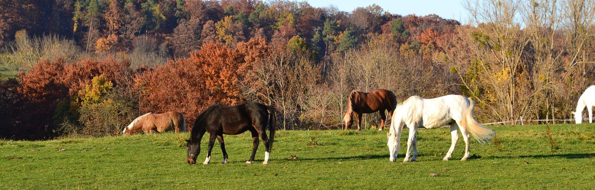 In Balance Equestrian